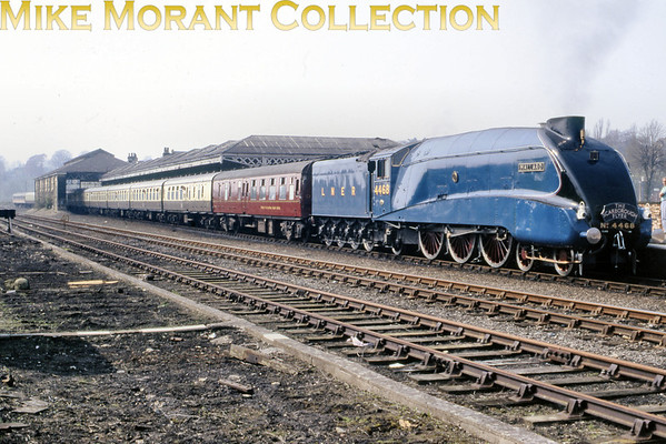 """The Scarborough Flyer hauled by the preserved LNER Gresley A4 pacific no. 4468 <i>Mallard</i> at Malton on Sunday the 26th of April 1987. The itinerary encompassed both a Saturday and a Sunday return trip from York to Scarborough but the difference between them is distinguishable by the style of headboard carried as the Saturday jolly used one with a white ground and allegedly, I've not yet seen evidence thereof, """"Flier"""" rather than """"Flyer"""" in the title."""